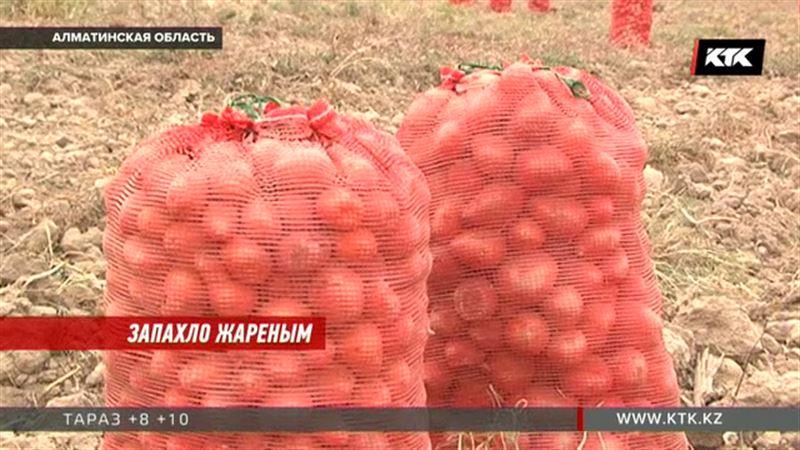 Фермеры будут рады, если цена картофеля достигнет 300 тенге