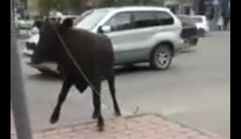 ВИДЕО: Бык напал на прохожих в центре Бишкека