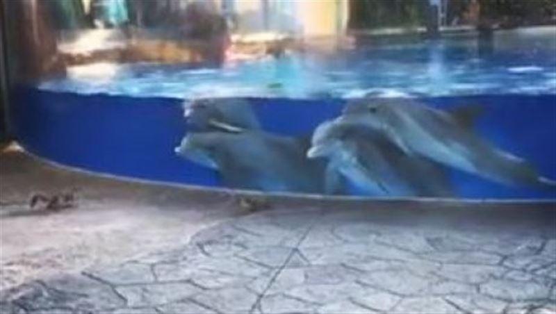 ВИДЕО: Дельфины засмотрелись на белочек