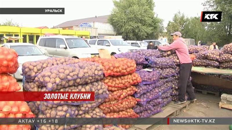 Цена на картофель уверенно растет в четырех регионах страны