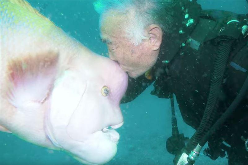 """Японец 30 лет дружит с хищной рыбой с """"человеческой"""" головой"""