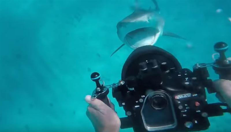 Акула едва не набросилась на водолаза во время съемки