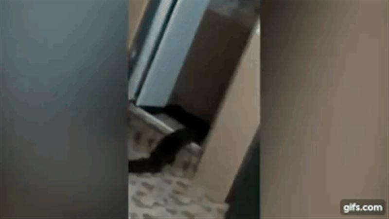 В Малайзии мужчина снял неизвестное существо, которое выползло из его туалета