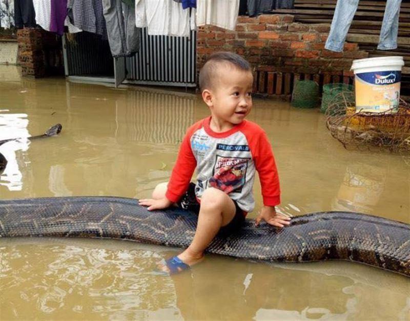 ШОК: Во Вьетнаме ребенок прокатился на 6-метровом питоне
