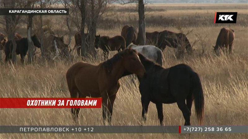 Барымтачи спрятали скот в разных селах, чтобы не привлекать внимания