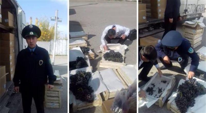 Партия зараженных фруктов едва не попала в Казахстан из Кыргызстана