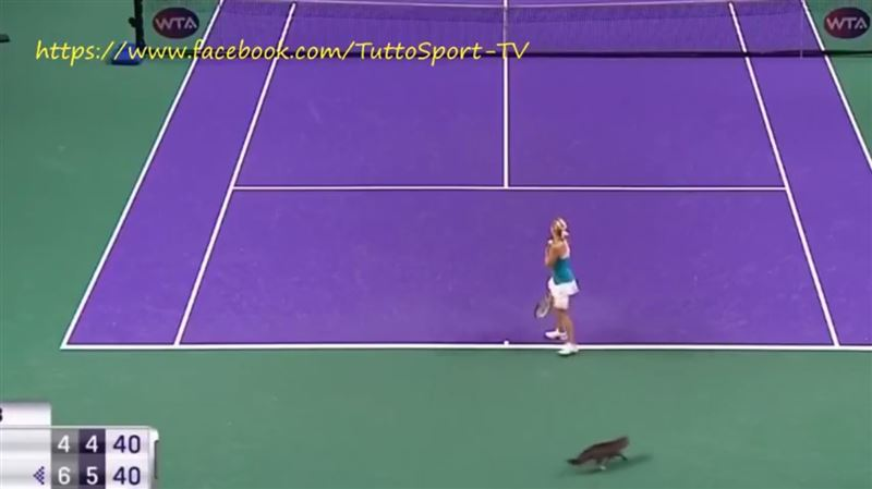 Кошка стала причиной проигрыша теннисистки
