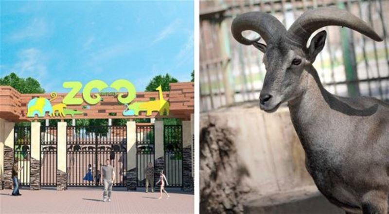 В алматинском зоопарке горного барана убило упавшей веткой