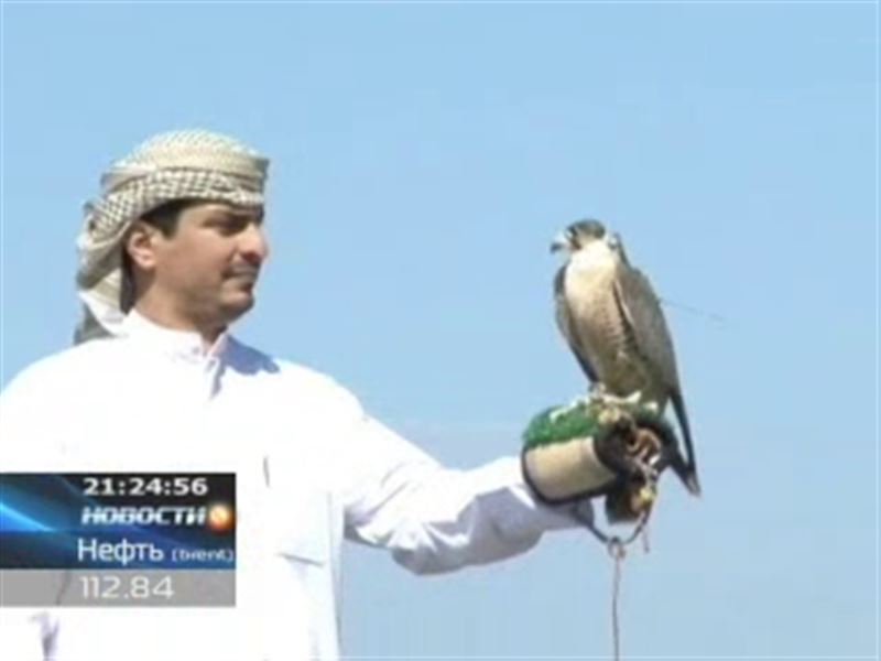 Арабские шейхи возвращают соколов-балобанов в Казахстан