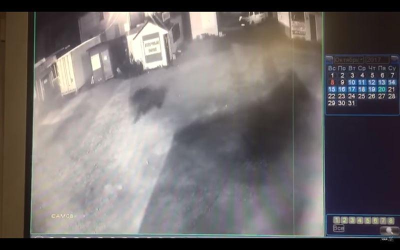 Житель Камчатки спасался бегством от медведя на рынке