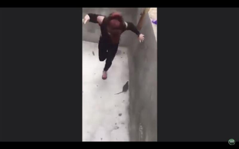 ВИДЕО: девушка метлой отбивалась от гигантской крысы
