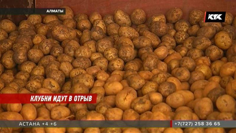 Министр сельского хозяйства предложил и для картофеля установить предельные цены