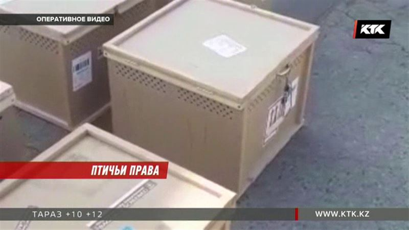 Живую контрабанду из Катара обнаружили в Алматы
