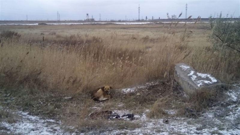 ШОК: собака нашла череп человека в Шахтинске