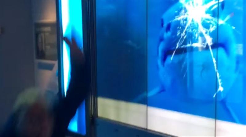 Большая акула атаковала посетителя в музее