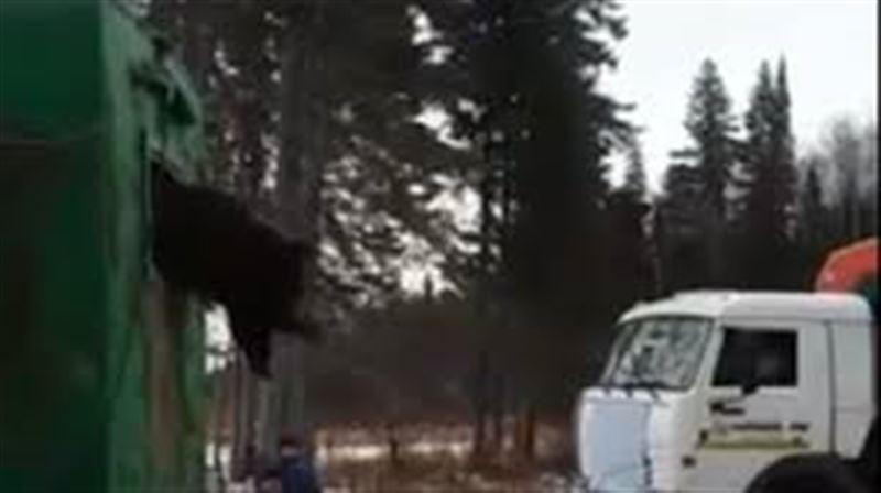 В Сети появилось видео спасения застрявшего в окне медведя
