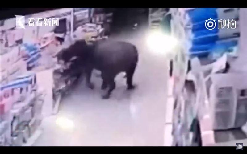 ШОК (18+): буйвол разгромил супермаркет и ранил посетителей