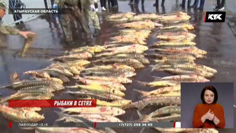 Более трехсот осетров нашли в лодке у браконьеров