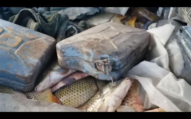 В машине жителя Атырау обнаружили 103 кг сазана