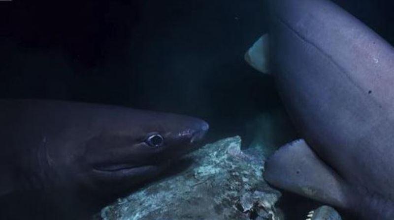 Акулы атаковали съемочную группу BBC