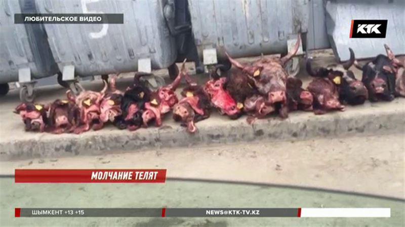 Десятки коровьих голов без языка обнаружили в Атырау