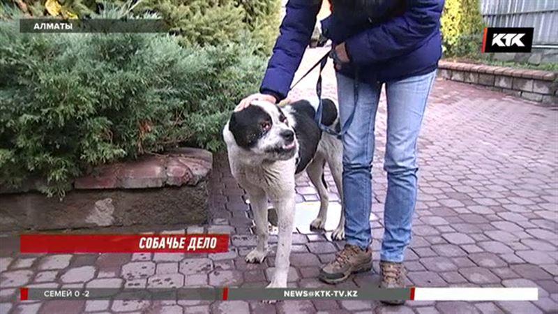 Зоозащитники спасли «чудо»  селекции, но идти псу некуда