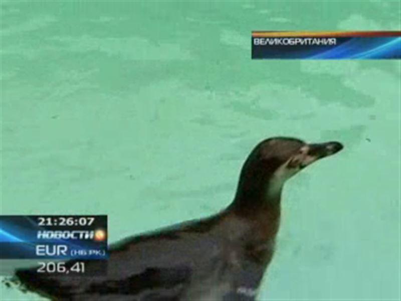 В лондонском зоопарке появился пляж для пингвинов
