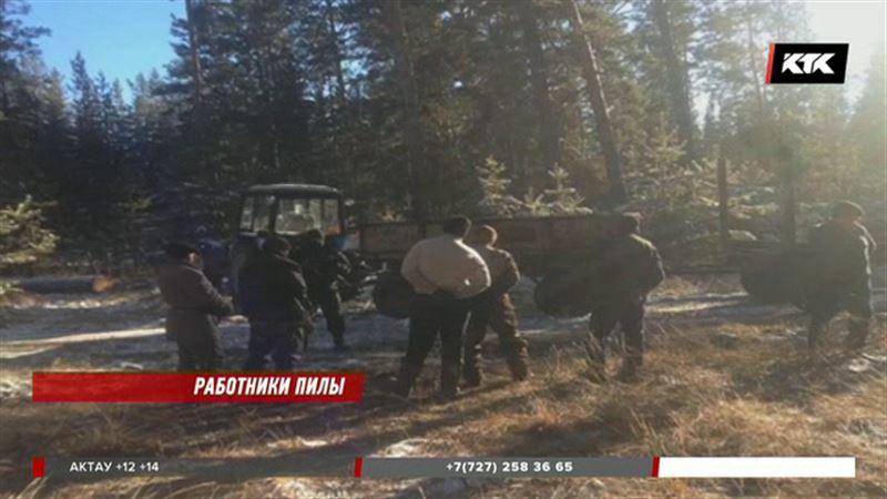 Банду «черных лесорубов» задержали в природном заповеднике