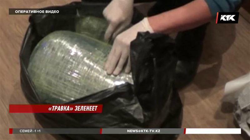 За провоз марихуаны жителю Жамбылской области грозит 10 лет