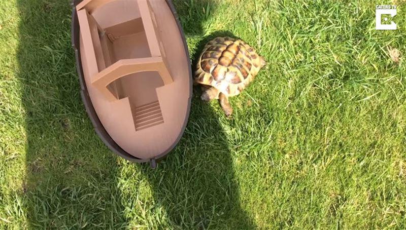 У британца в саду живет «сторожевая черепаха»