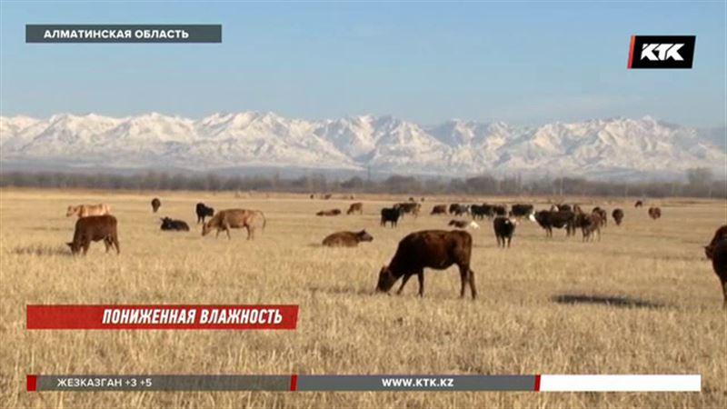 Животноводы Алматинской области говорят, что по вине чиновников остались без кормов