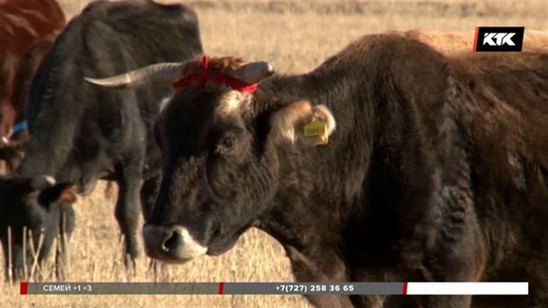 Чиновники Алматинской области оставили водохранилища без воды, а животноводов без кормов