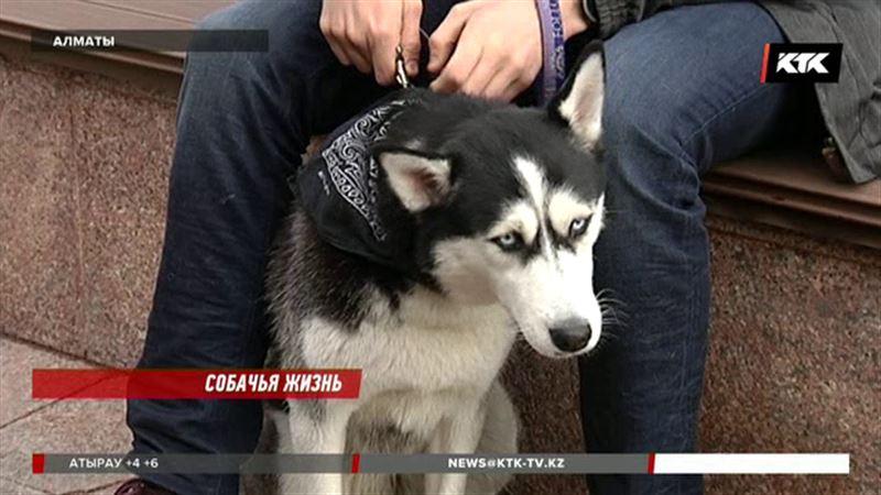 Владельцы собак должны будут убирать за своими питомцами, иначе штраф