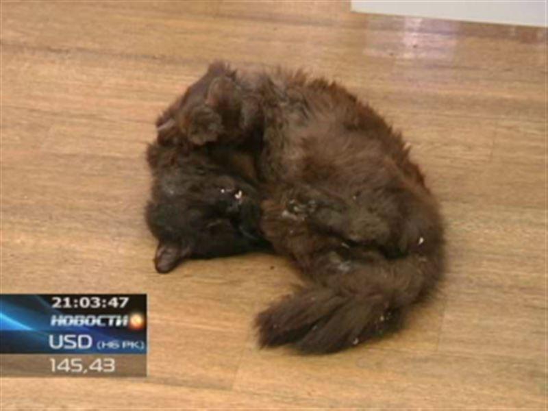 Хулиганы подбросили в кабинет известного юриста мертвую кошку