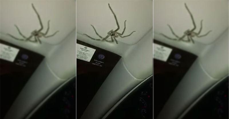 Жительница Австралии стала заложницей паука