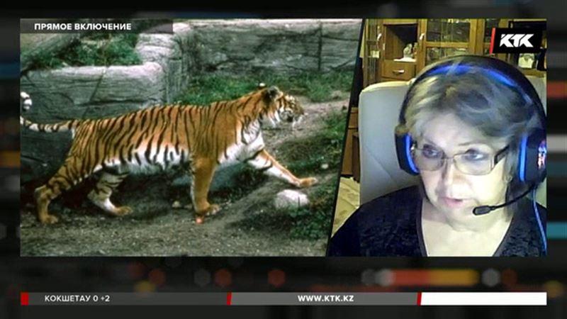 Почему именно в Казахстане создадут заповедник для тигров – представитель WWF в прямом эфире