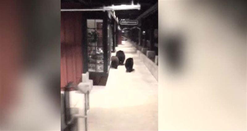 Три медведя наведались в торговый центр в Калифорнии