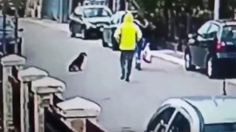 ВИДЕО: Бездомный пес спас женщину от нападения преступника