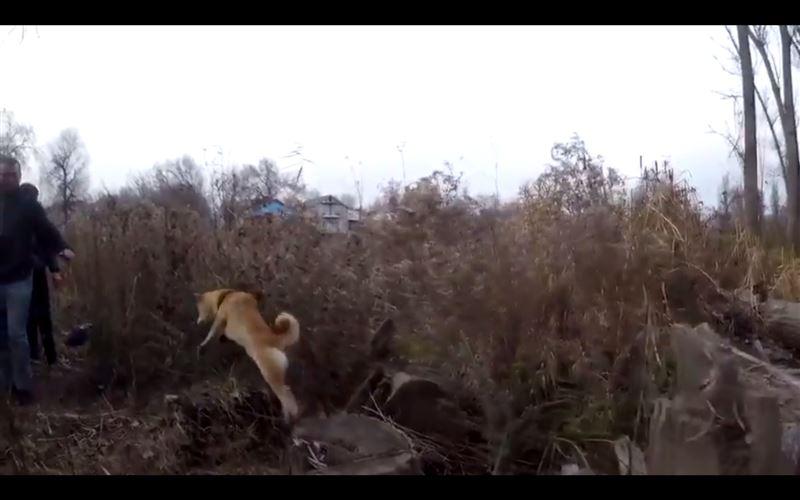 Автор ролика «Это фиаско, братан» путешествует по Казахстану со своим псом