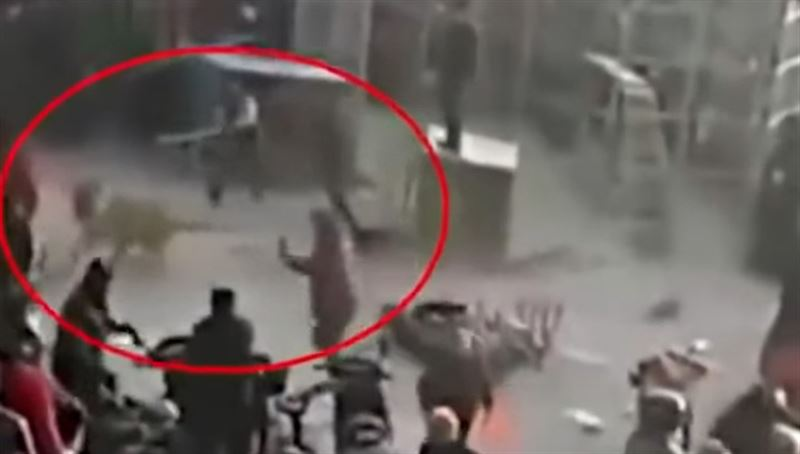 ВИДЕО: в Китае цирковой тигр вырвался из клетки и покалечил двух зрителей
