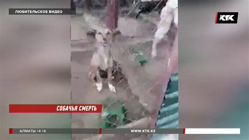 Ужас наяву: волонтеры обнаружили питомник, где издевались над животными