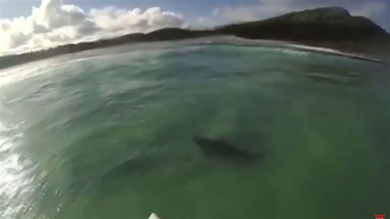 Серфер поймал волну над бычьей акулой