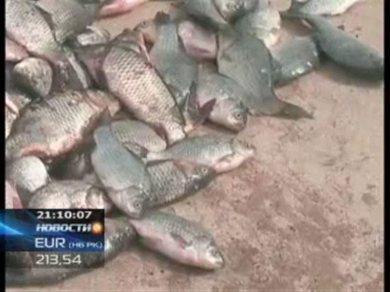 В Павлодаре изъяли почти полтонны радиоактивной рыбы