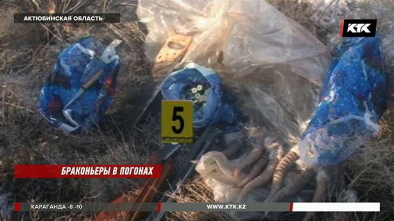 На сайгаков в Актюбинской области охотились сами  инспекторы