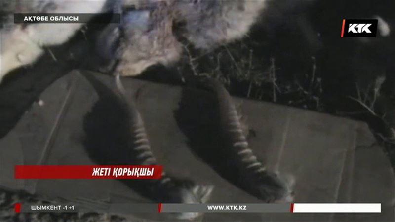 Ақтөбе облысында мүйізі үшін киіктерді қырған браконьерлер ұсталды