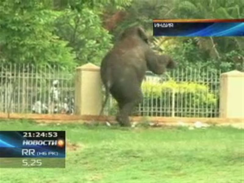 Два диких слона устроили погром в индийском городе Майсур