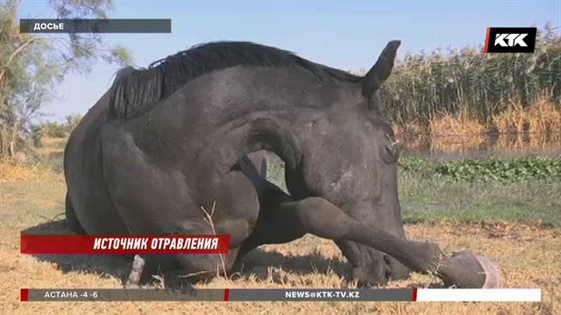 Опасным признали водоём в Жамбылской области – погибло 50 голов скота