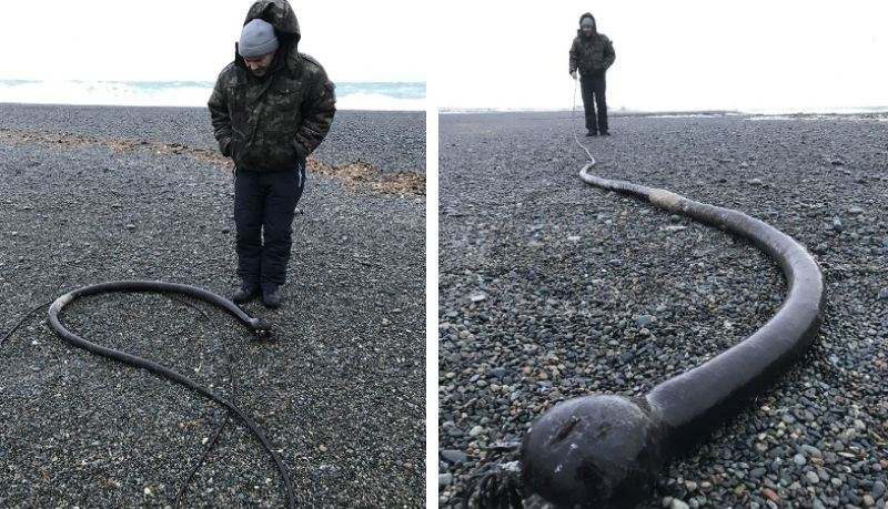 ШОК: На Чукотском полуострове обнаружили огромных «морских змей»