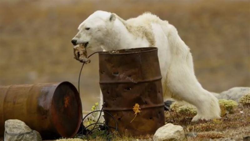 ШОК: Соцсети шокировало видео с умирающим от голода медведем