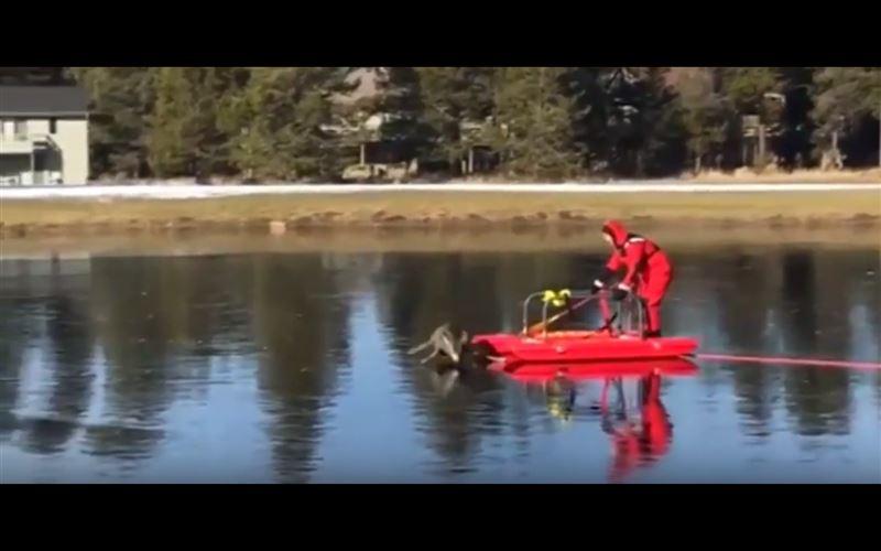 ВИДЕО: пожарный вызволил оленя, застрявшего на замерзшем озере